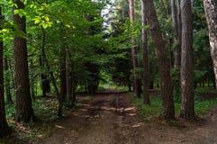 Переулок леса Стоковая Фотография RF