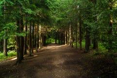 Переулок леса Стоковое Изображение