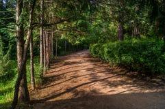 Переулок леса Стоковые Фото
