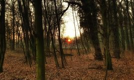 Переулок жабы пути цветов захода солнца деревьев лист леса большой Стоковое Изображение RF
