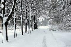 Переулок зимы дерева Стоковое фото RF