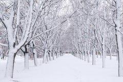 Переулок зимы Стоковое фото RF