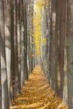 Переулок осени strewned с желтыми листьями Стоковые Изображения RF