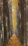 Переулок осени strewned с желтыми листьями Стоковые Фото