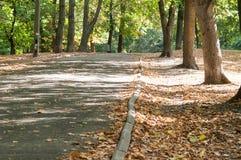 Переулок парка в городе Стоковое фото RF