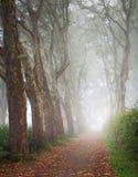 Переулок плоского дерева в тумане Стоковое Изображение RF