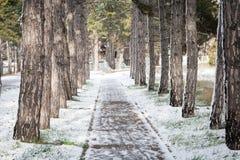 Переулок сосны покрытый с снегом Стоковые Изображения RF