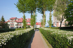 Переулок с зацветая изгородью в Wladyslawowo Стоковая Фотография