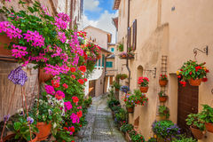 Переулок с цветками стоковая фотография rf