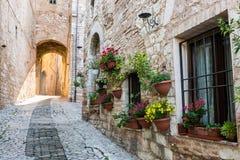 Переулок с цветками стоковая фотография