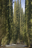 Переулок Cypress на солнечный зимний день Стоковое Фото
