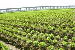 переход земледелия стоковое фото rf