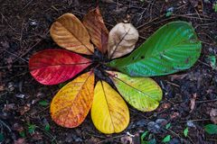 Переход кленового листа осени и концепция изменения для падения и изменения сезона стоковая фотография