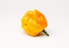 Перец желтого скорпиона Moruga горячий Стоковое фото RF