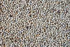 перец зерна предпосылки Стоковое Изображение