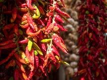 Перец и чеснок горячих чилей сухие Стоковые Фотографии RF