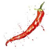 Перец красного chili акварели вектора Стоковое Изображение