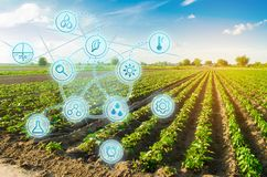 Перец поля фермы Нововведение и современная технология Проверка качества, выходы урожая увеличения Контролировать рост заводов стоковое фото rf