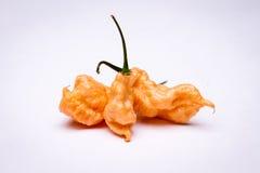 Перец призрака персика ` s Джэй супер горячий Стоковое фото RF