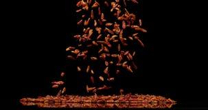 Перец Chili Кайенны, frutescens capsicum, специя падая против черной предпосылки, замедленного движения акции видеоматериалы