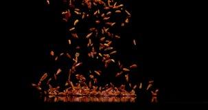 Перец Chili Кайенны, frutescens capsicum, специя падая против черной предпосылки, замедленного движения видеоматериал