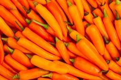 перец chili свежий Стоковое фото RF