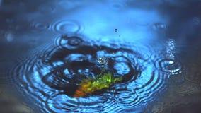 Перец chili Jalapeno падая в воду видеоматериал