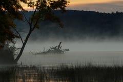 Перед восходом солнца Стоковое Изображение
