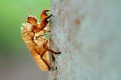 Перелиняя насекомые на деревьях Стоковое Изображение RF