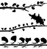 Передние планы муравья резца лист Стоковое Изображение