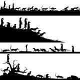 Передние планы Meerkat Стоковые Изображения RF