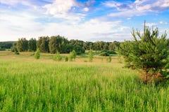 Передние части лета Стоковая Фотография