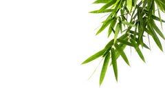 Передний план листьев Стоковая Фотография