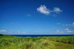 Передний план пейзажа greensward Стоковая Фотография RF