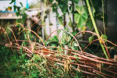 передний сад Стоковая Фотография