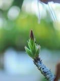 Перед цветенем цветка Стоковое Фото