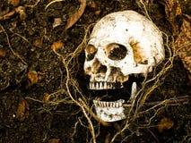 Перед человеческим черепом похороненным в почве с корнями дерева на стороне Стоковое фото RF