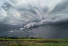 Перед штормом Съемка живой природы Стоковые Изображения RF