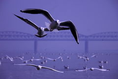 Перелётные птицы в зиме стоковое изображение