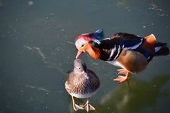 Перелётные птицы в парке Beihai Стоковое Изображение RF