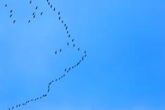Перелётные птицы летая на голубое небо Стоковые Фотографии RF