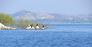 Перелётные птицы на озере Jaisamand, около Udaipur, Раджастхан Стоковая Фотография