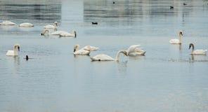 Перелётные птицы с побережья Pomorie, Болгарии Стоковое Изображение RF