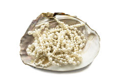 Перла в раковине Стоковая Фотография
