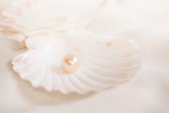 перла Стоковая Фотография