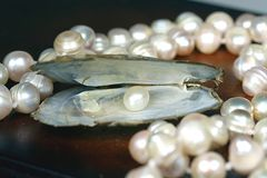 перла Стоковое Изображение