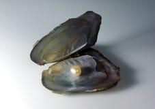 перла Стоковая Фотография RF