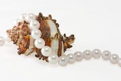 перлы 1 rope раковина Стоковое Фото