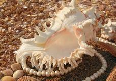 перлы cockleshells предпосылки Стоковая Фотография RF