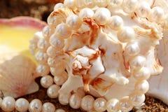перлы cockleshells предпосылки Стоковая Фотография